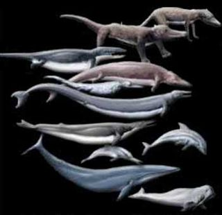 1-22evolution_of_whales