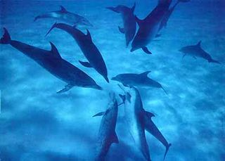 12-12dolphins