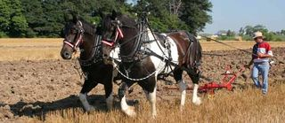 10-10 horse-drawn-plows-big