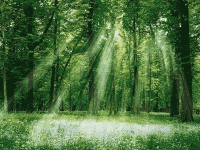 10-6 green_forest_