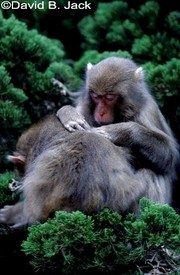 124macaques
