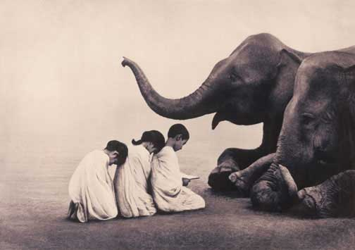 Elephants with children